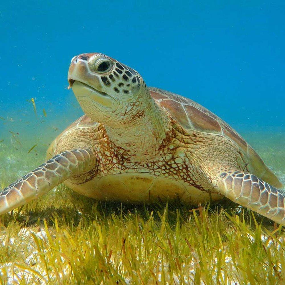 Snorkelling Innahura Maldives