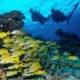 Diving Innahura Maldives
