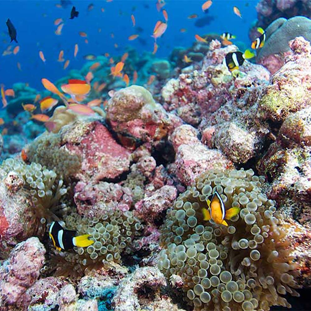 Innahura Maldives Coral Reef
